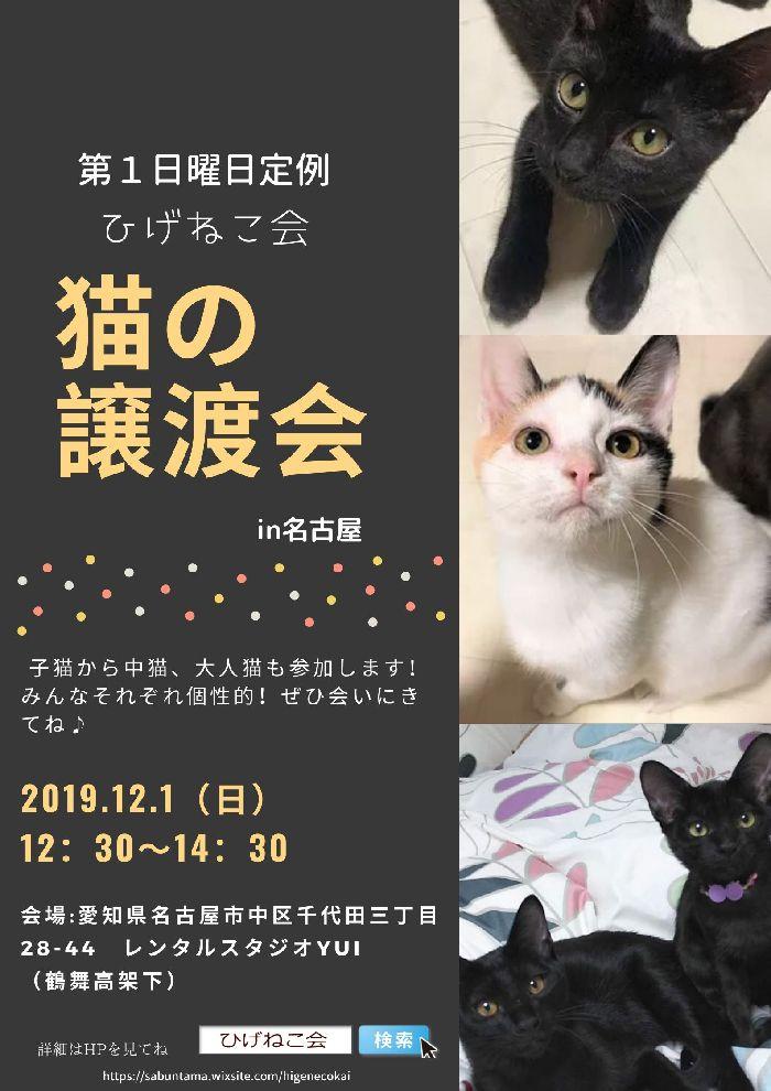 本日12月1日は名古屋市で保護猫の譲渡会!(ひげねこ会)