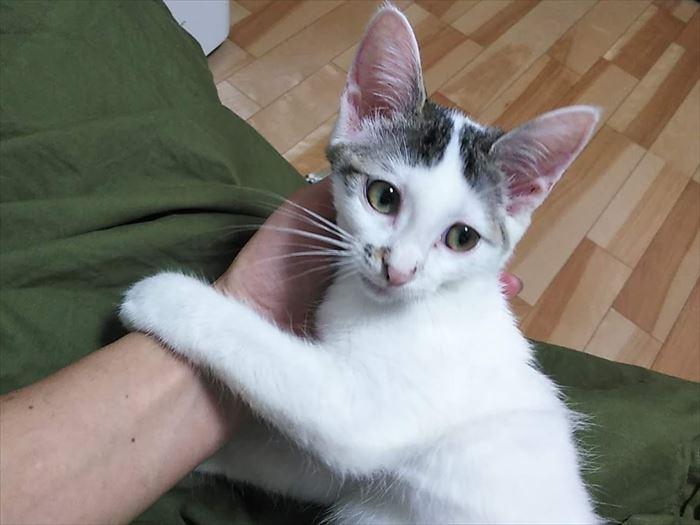 全面的に人間を信用している子猫ハンナちゃん…落ちるよ(^^;)