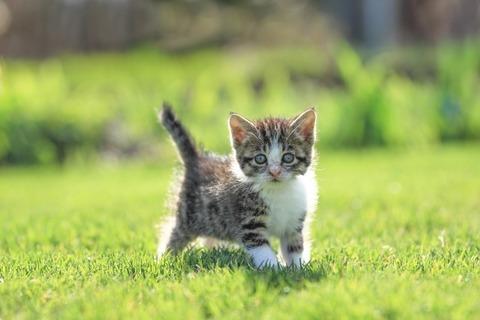 愛知県で保護猫の預かりボランティアやってます♪まずはご挨拶