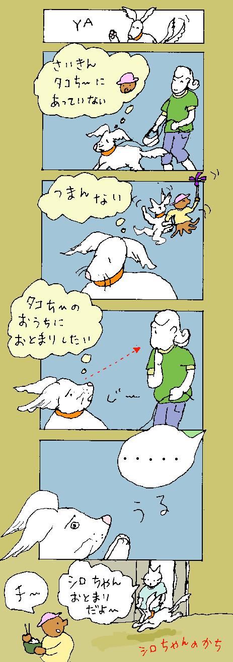 maru344