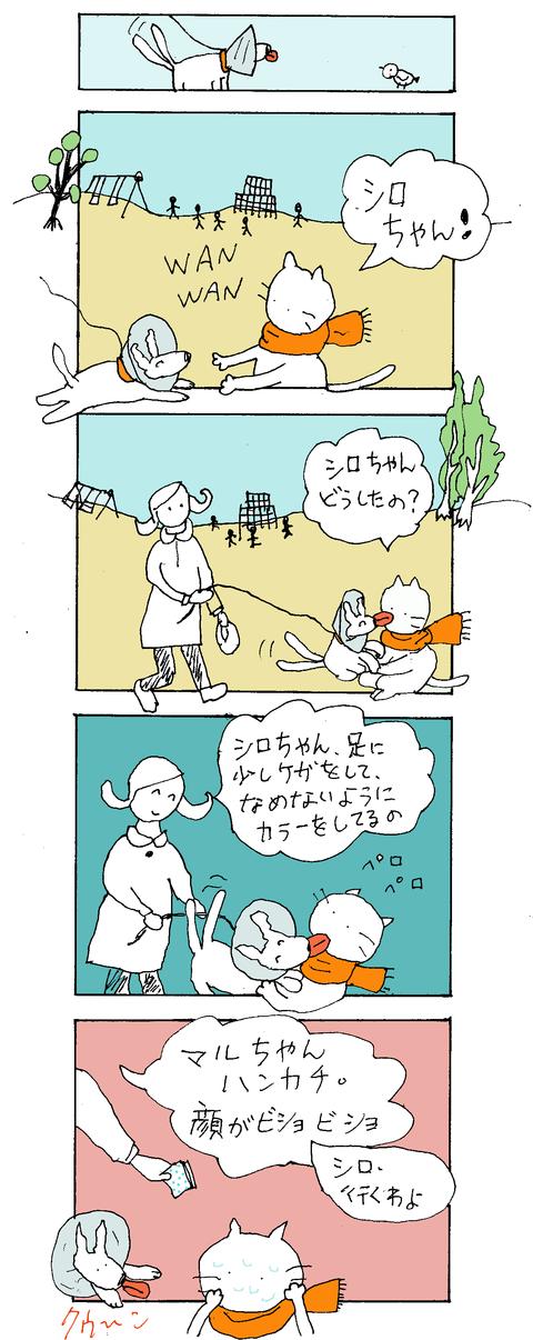 maru81