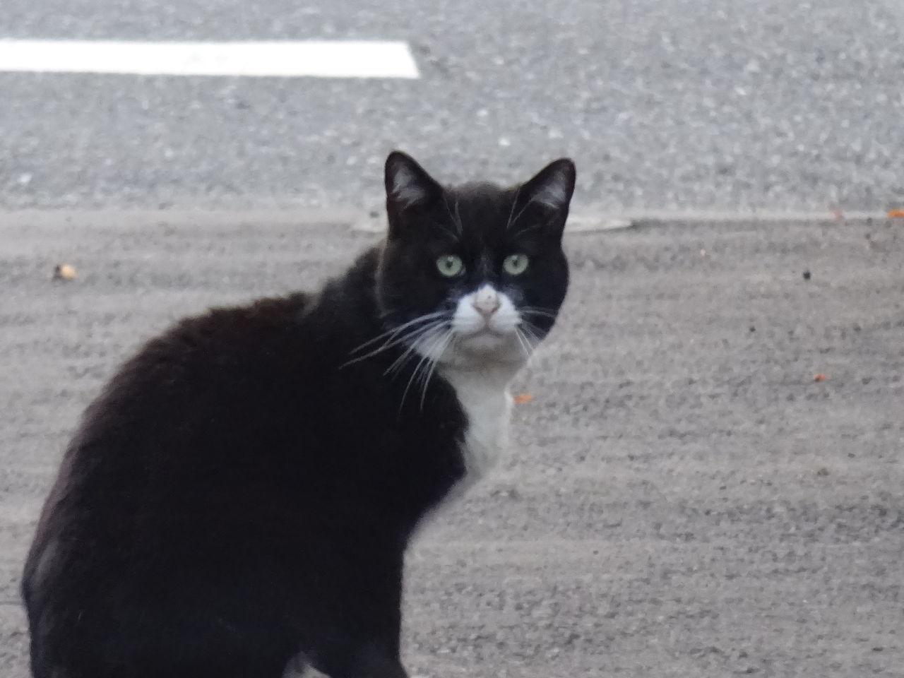 DSC06078 ねこかます : 老猫、老猫、…誰だお前は!(20150501今朝の一枚) ねこ