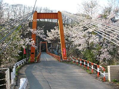 華亭前の橋と桜