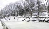 盛岡公園の池1