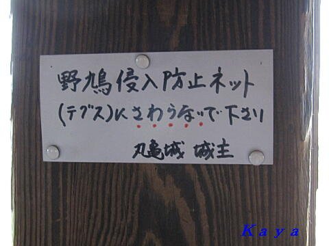 4IMG_5313