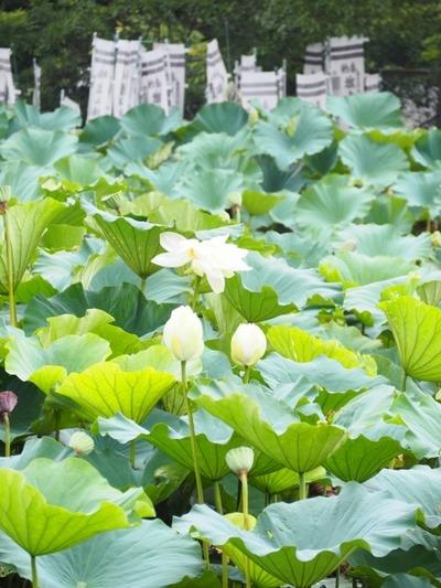 15鎌倉P8150136