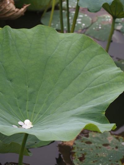 15鎌倉P8150083