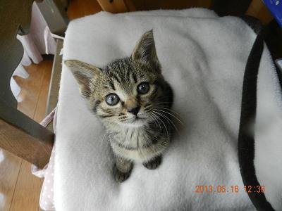 キジ子猫2