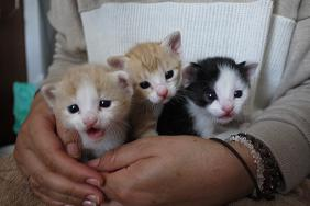 3匹こネコ
