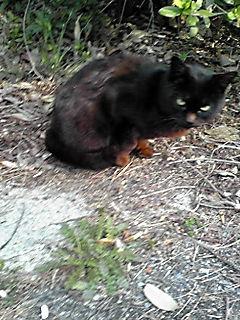 黒猫ちゃん2