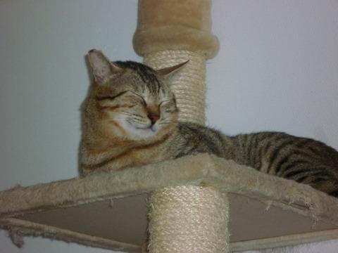 トラちゃん睡眠中