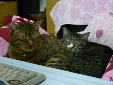 二匹でおやすみ