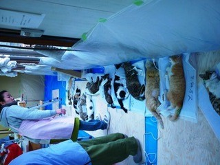 webP1110464  手術を待つ猫たち