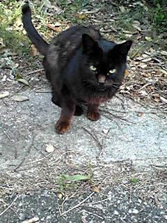 黒猫ちゃん1