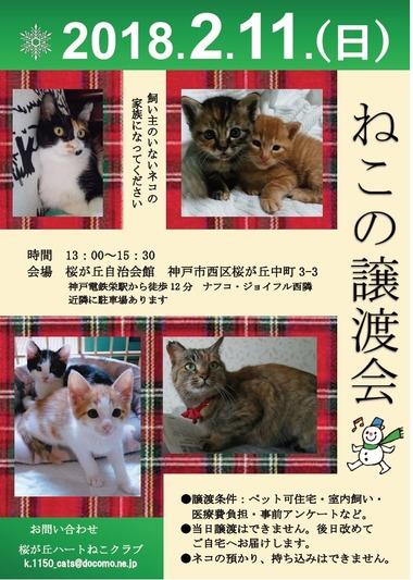 2月桜ヶ丘譲渡会