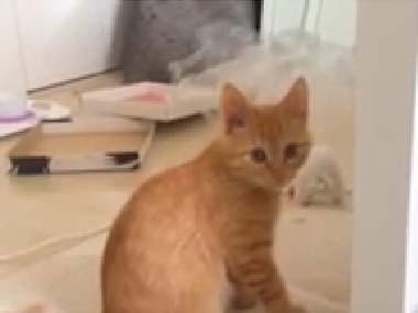 猫が「ガシガシ」ぬいぐるみで遊んでいた → 元気だなぁ → と思ったら