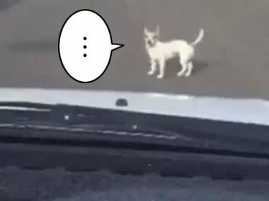 道の真ん中にイヌがいた。車を通せんぼする。どうしたんだろう? → ・・・ファッ!?