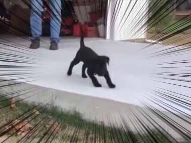 子イヌを初めて外に出してみた。嬉しそうに跳ねて芝生に飛び出す → こうなる…