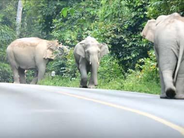 道路に3頭の大きなゾウがいた。危なくて通れない。すると向こうから1台のバイクがやってきた…