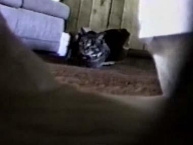 ネコが 紙袋に入れたカメラを見つめている → 袋を「カサカサ」してみた → 結果