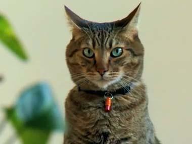 ネコはいったい何を考えているの? → 猫に見つめられた時の「緊張感」は異常…