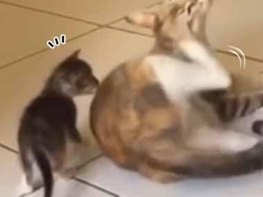 【子ネコ】 母猫が後ろ足でカキカキしていた。コピーキャット♪ → 隣で子猫はこうします…