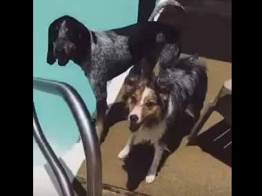 イヌの前でプールに「フリスビー」を投げてみた。1匹はすぐに飛び込んで取りに行く → もう1匹の犬はこうした…