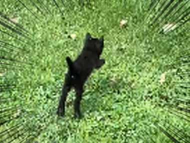 子ネコたちが庭で遊んでいた。ヤギさん一緒に遊ぼうよぉ~♪ → 追いかける子猫はこんな感じ…