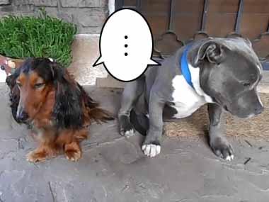 うちのイヌが靴をかじった。イタズラしたのはどっち? 2匹並べて聞いてみる → 犬はこうなった…