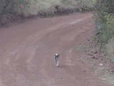 犬がトコトコ歩いていた。しかしその道は「ラリーレース」のコースだった。後ろから車が猛スピードでやってくる! → 結果…