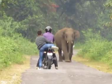 バイクで2人乗りしてたら目の前にゾウが現れた → こっちに向かってきてね? → 結果