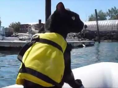 黒ネコを乗せたボートが 港を進んでいた → ヨットに近づく → すると・・・