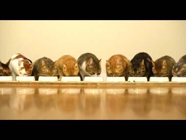 9匹のネコが 横一列に並んで「カリカリ」を食べている件w