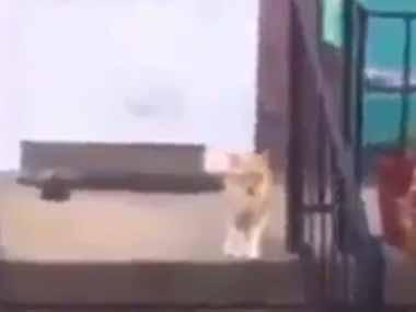 ネコが玄関の前にいた。近づいてみる → なかなかの美声でした…
