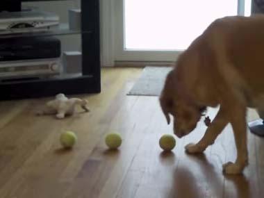 うちの犬に 「テニスボールを拾って」と頼んでみた → こうなるw