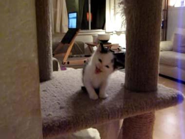 1匹の子ネコが「キャットタワー」で遊んでいた → 返事が可愛すぎて生きるのがつらい…