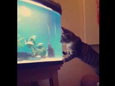 ネコが「水槽」の魚を見ていた。捕まえようと前足を動かす → すると…