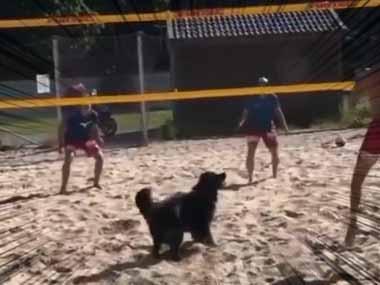【イヌ】 砂浜で「ビーチバレー」をやってみた。犬も参加する → 勝負はこうなった…