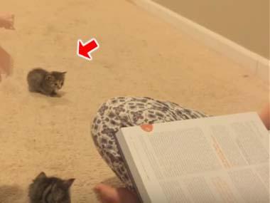 ちっこい子ネコが床の上にいた。「後ろ足」で耳のうしろを掻きはじめる → こうなっちゃうw