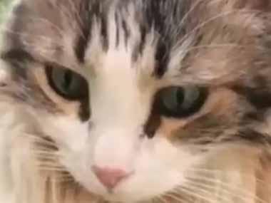 ネコの前足の間でピヨピヨヨ♪ 猫はウズラのヒナと友達になったようです…