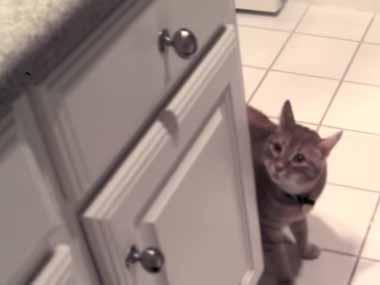 私はネコを飼ったことがない。どう接していいのかも分からない → そんな私が友人が飼っている猫に出会ったら…