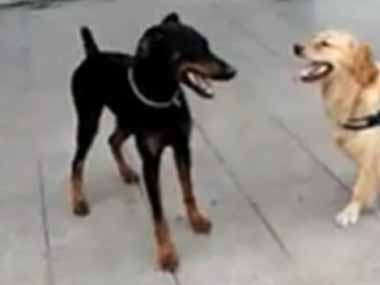 このイヌは達人に違いない! → 犬が見せる「廻し蹴り」はこんな感じ…