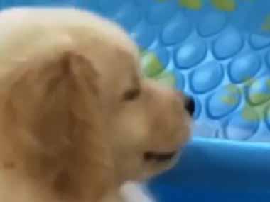 子犬の「おもちゃ」を大きな桶に投げ入れてみた。捕まえるワン♪ → 飛び込む子犬はこうなっちゃう…