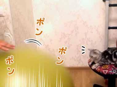 ネコが椅子でくつろいでいた。目の前で「バランスボール」を弾ませてみる → 猫は真似してこうする…