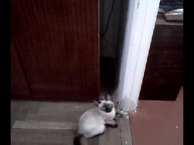 うちのネコが 棚の上に登ろうか考えていた → さすがに高くて登れないよね? → と思ったらw