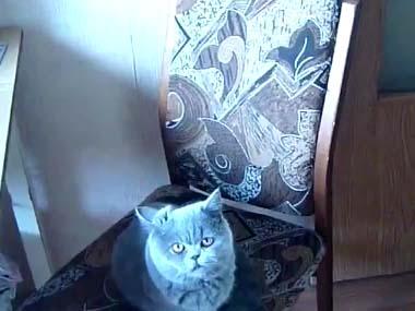 うちのネコに 「ドアを閉めて」と頼んでみた → 結果