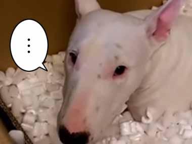 ワンコはとっても楽しそう! ダンボール箱に「緩衝材」がいっぱい入っていた → その中にいる犬はこうなるw