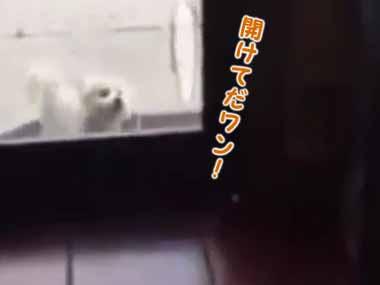 子イヌが家に入りたくてドアの向こうで鳴いていた。すると部屋にいた犬がいったん外に出る → そしてこうした…