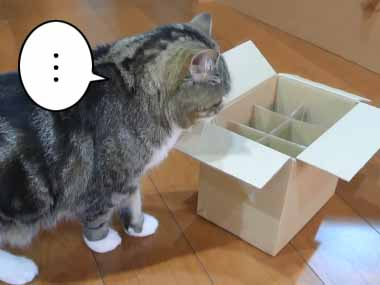 そのネコは箱に入るのが好きだった。でも今回の箱には「仕切り」があって入れそうもない。どうする? → 猫はこうした…