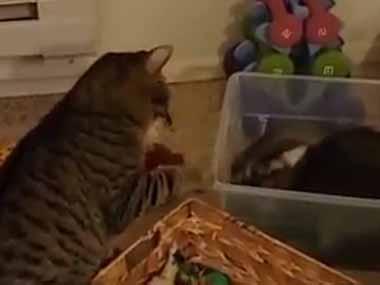 2匹のネコがじゃれていた。1匹はケースの中にいる。ていやぁ! → 自ら墓穴を掘ってしまう…
